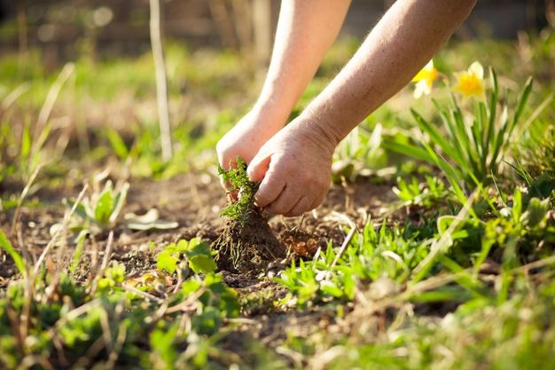 como-eliminar-malas-hierbas