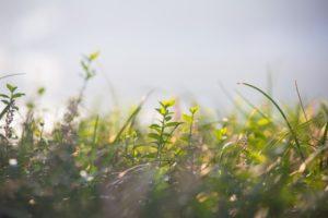 eliminar-malas-hierbas