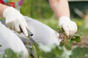 quitar-malas-hierbas