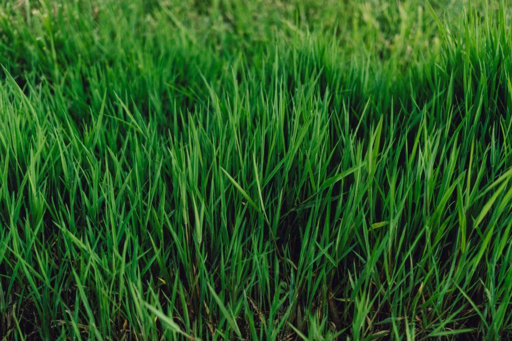 como-desbrozar-hierba-alta