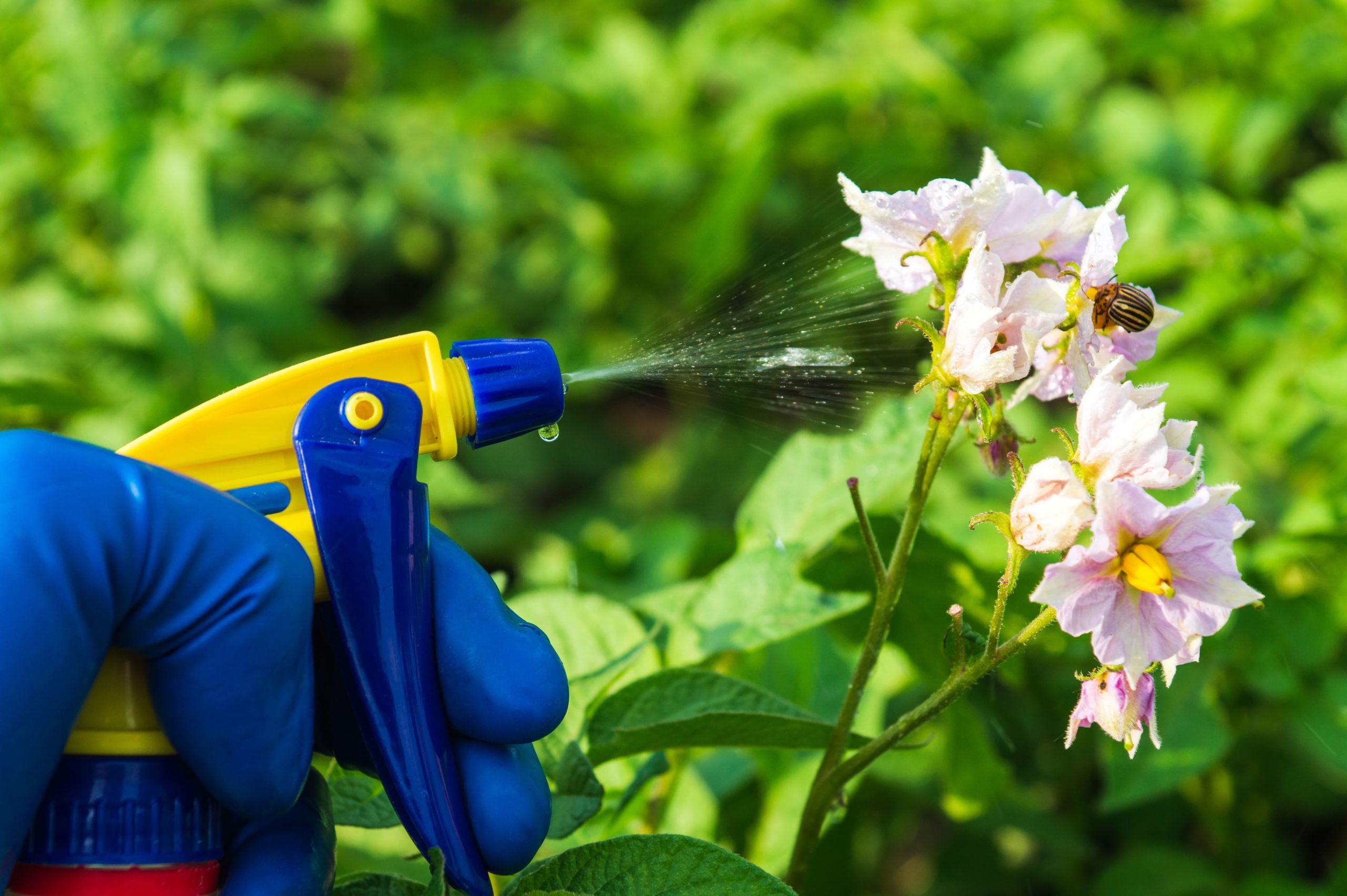 mantener jardin en verano